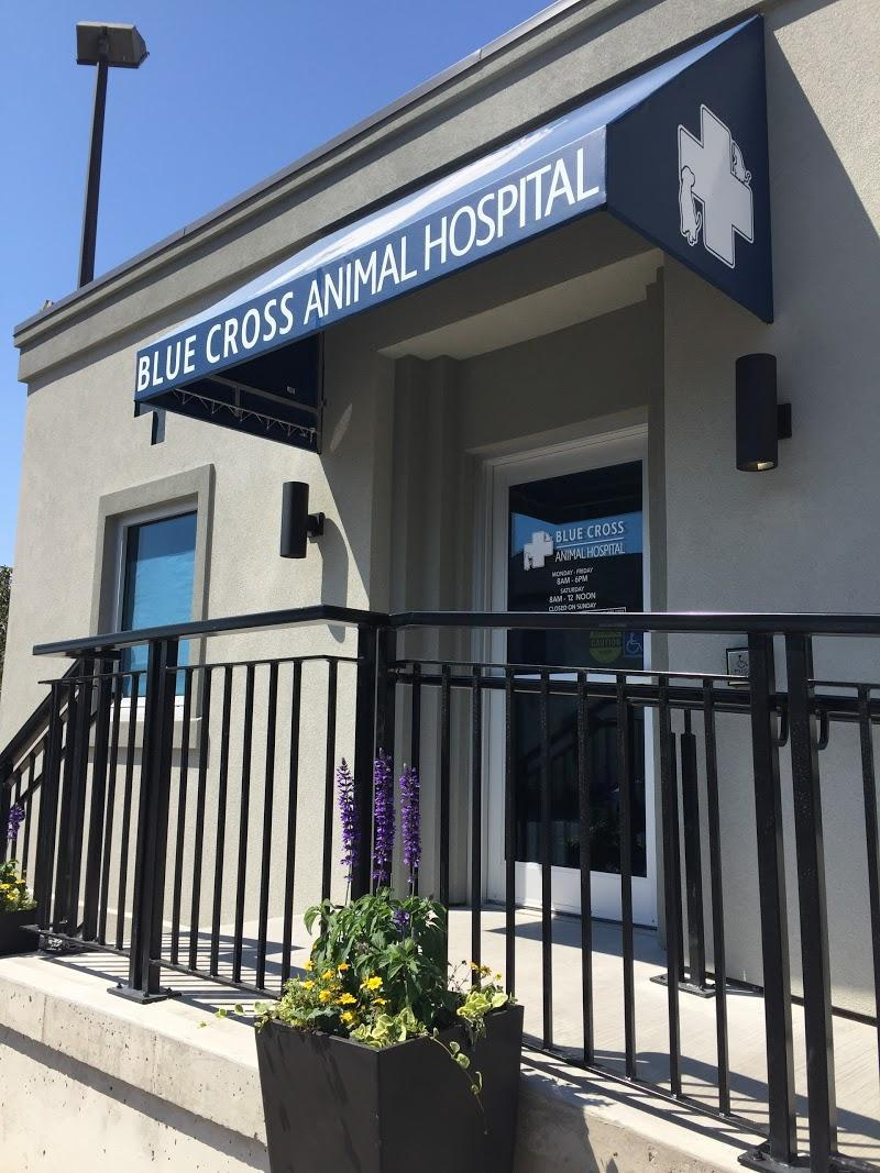 Veterinary Blue Cross Animal Hospital in Hamilton (ON) | theDir