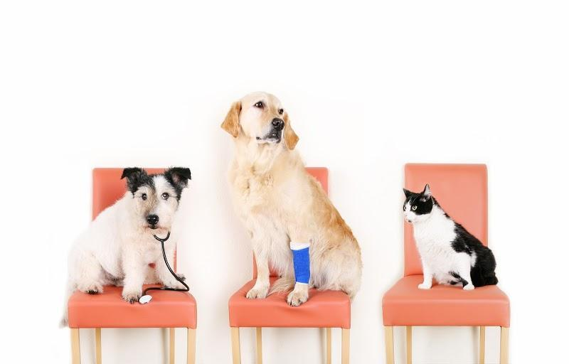 Veterinary Hamilton Regional Emergency Veterinary Clinic in Hamilton (ON) | theDir